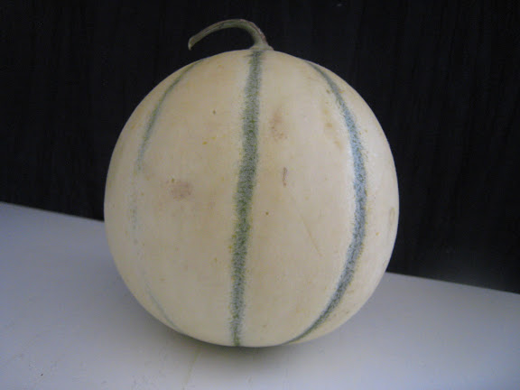 Cantaloupe vs Muskmelon - What is a real Cantaloupe?